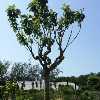 Exclusieve bomen